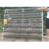 China A Type Mesh Layer Quail Bird Cage Of Low Carbon Steel Wire With Sand Cup on sale