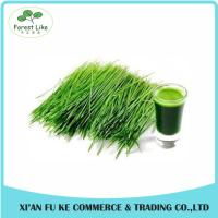 High Quality Green barley grass juice powder Manufactures