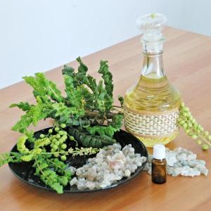 Frankincense Boswellia Carterii 100% Pure Therapeutic Grade Essential Oil Manufactures