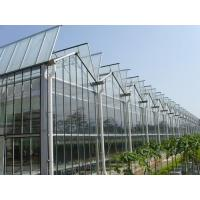 Simple Constructure Commercial Glass Greenhouse With Galvanized Steel Screws / Bolts Manufactures