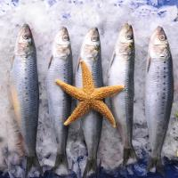 Wholesale BQF Good quality frozen food sardine with 200-300g on Landing. Manufactures