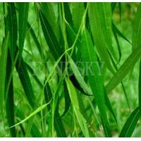 China White willow bark extract healthy nutrient additive on sale