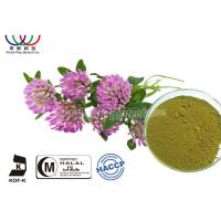Red Clover Blossom Extract Water Soluble , Natural Herbal Extracts For Health Food Manufactures
