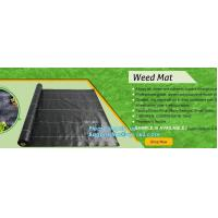 China green color Plastic Ground Cover Mats mulch weed control fabric mat,Weed Barrier Around Fruit Trees PP Woven Weed Mat fo on sale