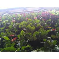 Vertical Garden PE Fabric Reusable Hanging Flower Baskets For Vegetable / Flowers Manufactures