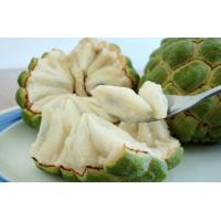 Quality Anti-cancer high quality 100% pure soursop extract-Annona Muricata L. for sale