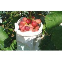 Edible Vine Table Red Globe Grapes Containing Anthocyanins Health-Protective Manufactures