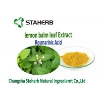 Lemon Balm Leaf Natural Herbal Extracts Manufactures