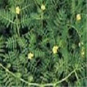 Lutein,Usnic Acid, Gymnema Sylvestre P.E.,  Eurycoma Longifolia Jack (tongkat ali ), Schisandra P.E Manufactures
