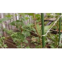 Buy cheap Plastic Coated Plant Support Stakes from wholesalers