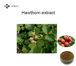 GMP Herb Extract Powder Hawthorn fruit Extract TLC4:1、 10:1 Manufactures