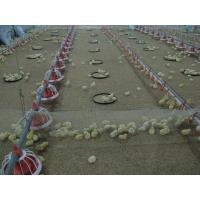 China broiler poultry farm equipment on sale