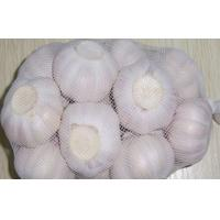 China 6.5cm fresh normal white red garlic original red garlic in the cold storage on sale