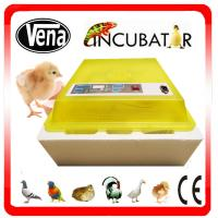 CE Approved Full Automatic 48 eggs incubator mini chicken egg incubator for sale Manufactures
