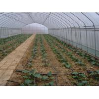 Small Size Single Span Greenhouse , Easy Operate Polyethylene Foil Greenhouse Manufactures