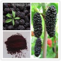 High quality organic dried Mulberry Fruit Extract powder