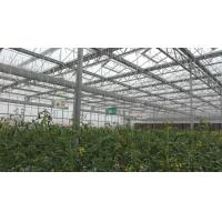 Plastic Film Tomato Plant Greenhouse Span Width 9.6 / 10.8 / 12m Easy Assemble Manufactures