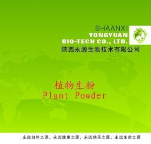 China Shaanxi Yongyuan Bio-Tech supply Herbal Powder,Achyranthes aspera Powder on sale