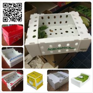 Fresh plastic 5kg 10 lbs okra asparagus green bean packaging box