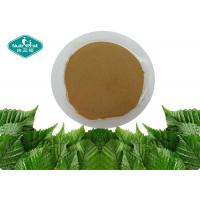China Natural Mulberry Leaf Extract Fine Yellow Brown Powder With 1- Deoxynojirimycin on sale