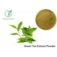 China Water Soluble Pure Green Tea Extract Camellia Sinensis Leaf Extract Anti - Caries Effect on sale