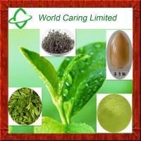 China Weight Loss Ingredient Green Tea extract Tea polyphenol 50%-98% HPLC on sale