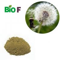 Dandelion Extract Powder , Dandelion Root Supplement For 10% Flavone Manufactures