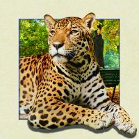 Custom Lenticular Image Printing For Gift , 5d Animal Collage Poster 15.7x15.7 Inches Manufactures