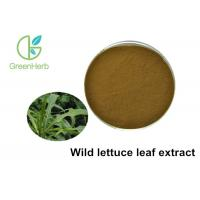 100% Pure Natural Wild Lettuce Leaf Extract Resist Radiation Damage Manufactures