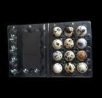 Disposable plastic quail egg tray 12 holes quail egg tray plastic egg tray for quail eggs 12 slots Manufactures
