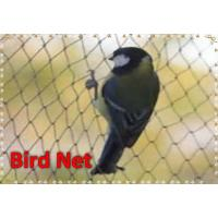Agricultural Virgin HDPE Anti-Birds Net Plastic Net Anti-Bird Netting Manufactures