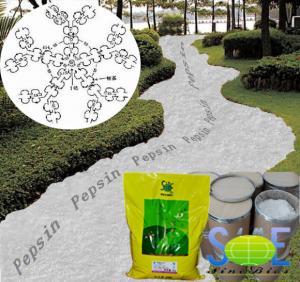 Amorphous Protease Enzyme Powder Animal Pepsin Supplement 10,000NFU/g Szym-PEP10FE Manufactures