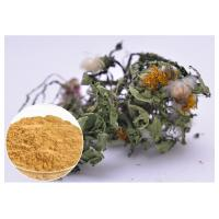 Quality Lower Blood Pressure Herbal Plant Extract Flavones Dandelion Root Extract Powder for sale