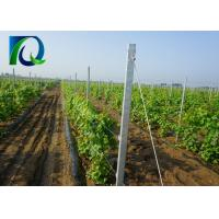 High Strength Vineyard Trellis End Posts With Round Holes 2.0mm-4.0mm Thickness Manufactures