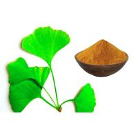 Ginkgo Biloba Extract Powder With Advanced Extraction Technology CHP2015 Manufactures