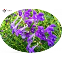 98% Baicalin Water Soluble Baical Skullcap Root Extract Manufactures
