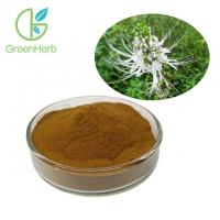 China Brown Yellow Fine Plant Extract Powder Herb Orthosiphon Stamineus Extract Powder on sale