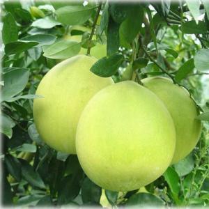 Naringin 98% Citrus Aurantium Extract PowderPharmaceutical Grade CAS 480 41 1 Manufactures