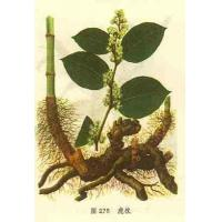 Giant Knotweed Extract,Resveratrol 20%,50%,99% Manufactures