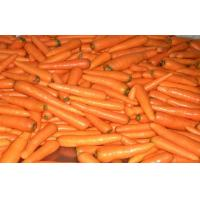 China Contains Minerals Fresh Organic Carrot Washed And Polished , Anti-Oxidants, Anti-cancer on sale