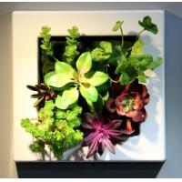Plastic Frame Artificial Living Plants Wall Hanging Ornament Craft for Commercial Office Manufactures