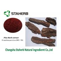 Pine Bark Extract Standard Reference Materials Contain Polyphenols Proanthocyanidins Manufactures