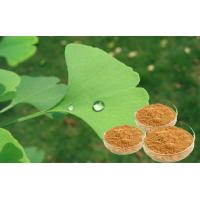 China Pure Natural Botanical Ginkgo Herbal Extract Bright Yellow Brown Powder on sale