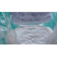 High Purity Testosterone Propionate Raw Testosterone Powder / Injectable Liquid  CAS 57-85-2 Manufactures