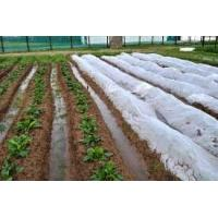 Waterproof Agriculture Non Woven Fabric Roll 4% UV Treated Weed Control Manufactures