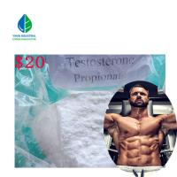 China Test Propionate Anabolic Steroid Powder Testosterone Propionate For Fat Burning on sale