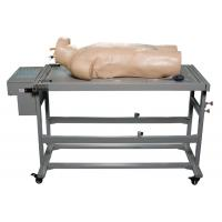 Comprehensive Puncture Clinical Simulation Various Postions for Hospitals Training Manufactures