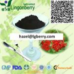 Elderberry fruit powder Manufactures