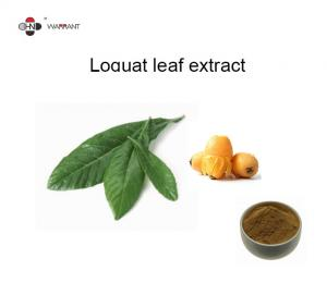 White Organic Loquat Leaf Extract 98% Ursolic Acid Powder Food Grade Manufactures