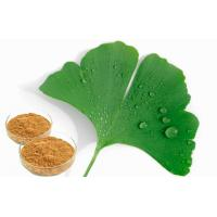 Food Supplement Ginkgo Biloba Leaf Extract With GCAP Planting Base Manufactures